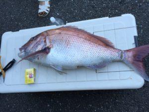 真鯛94cm