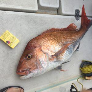 80cmオーバー真鯛